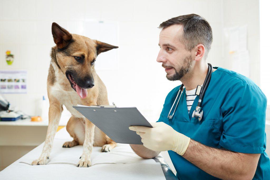 Profesjonaliści w zakresie usług dla zwierząt